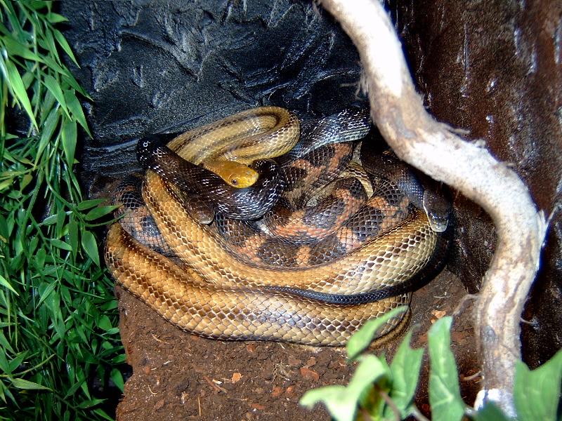 snake-pile01.jpg